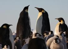 Voyage en Antarctique : Rencontre Avec les Manchots