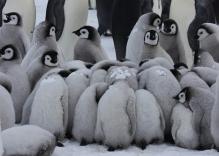 Voyage en Antarctique : Pôle Sud et Manchots